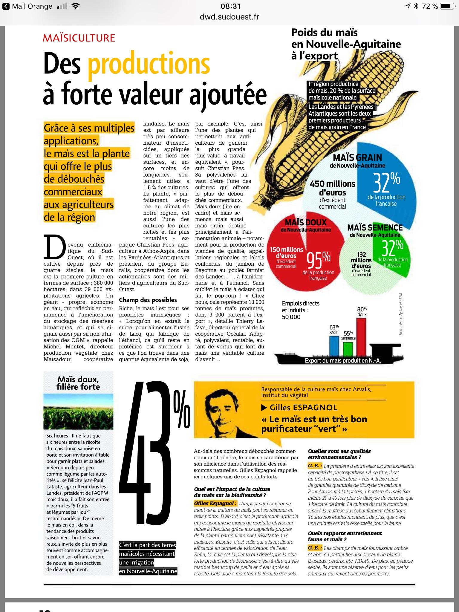article maïs